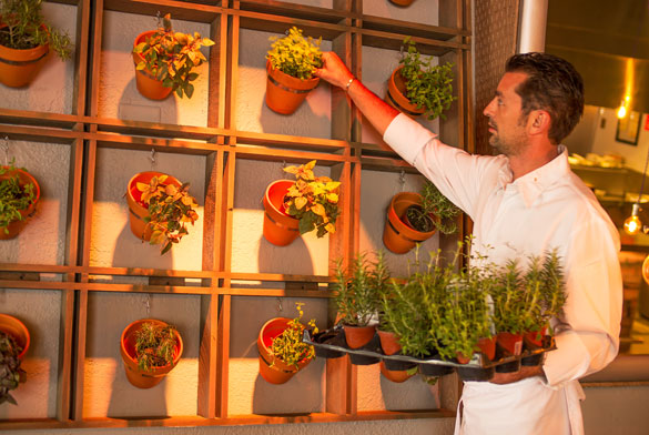 Chef Joulin tends to his unique indoor herb garden at Semilla Eatery & Bar